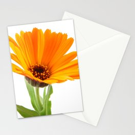 Marigold - Calendula Officinalis Isolated On White Background Stationery Cards