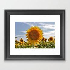 Spanish sunflower Framed Art Print