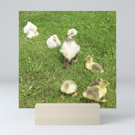cute baby animals, small ducks and geese on a green meadow in summer Mini Art Print