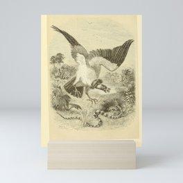006-King Vulture, sarcoramphus papa13 Mini Art Print