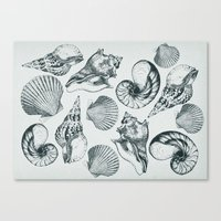 shells Canvas Prints featuring shells by sustici