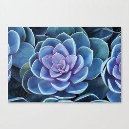 Succulenten purple turquoise Canvas Print