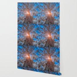 High Tree Wallpaper