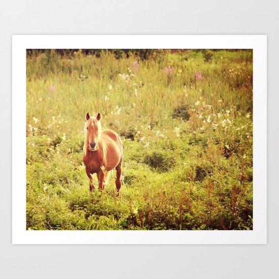 All the Pretty Horses Art Print