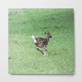 Just Keep going - Fawn Photograph Metal Print