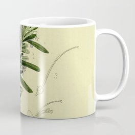 Botanical Rosemary Coffee Mug