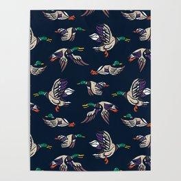 Male Mallard ducks Poster