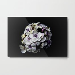 Sweet William Surprise Metal Print