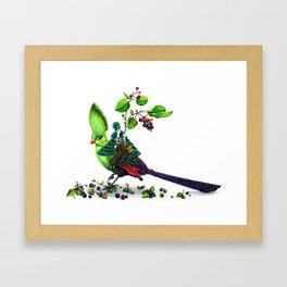 Turaco Framed Art Print
