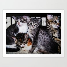 Adorable Kittens Art Print