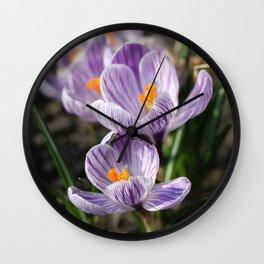 Crocuses Wall Clock