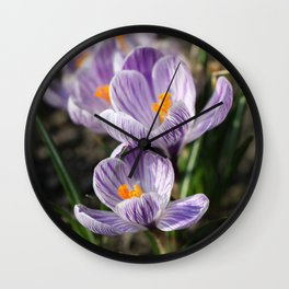 Crocuses Wall Clock