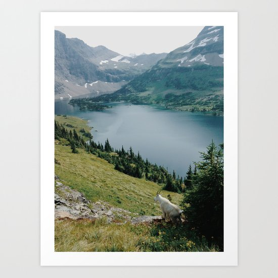 Mountain Goat at Hidden Lake Art Print