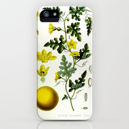 Vintage Illustration Medicinal Plants No 1 iPhone Case