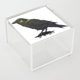 Crow Contemplation Acrylic Box