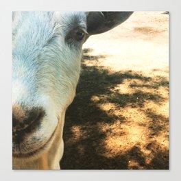 Goat Friend Canvas Print
