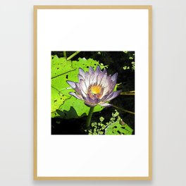 Water lily pad Framed Art Print