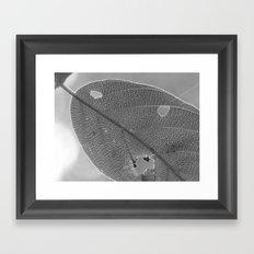 leaf 2017 Framed Art Print