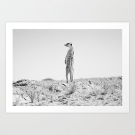 Black and white meerkat in the desert of Botswana | Travel photography Africa Art Print