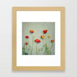 Red Ranunculus Flowers Framed Art Print