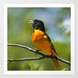 Orange Oriole Art Print
