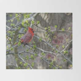 His Majesty the Cardinal Throw Blanket