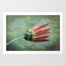 Vintage Daisy in the Rain Art Print