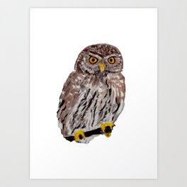 Chouette chévèche - Owl Art Print