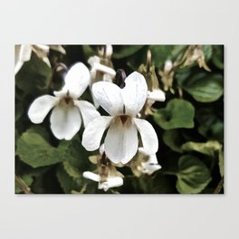 Wild White Violet; Take A Chance On Happiness Canvas Print