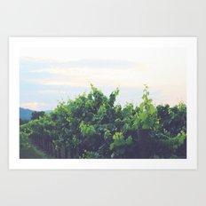 Dusty Vineyard Art Print