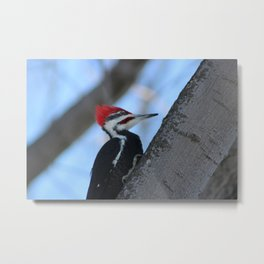 Wood Pecker Metal Print