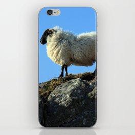 Kerry Hill Sheep iPhone Skin