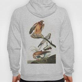 Marsh hawk, Birds of America, Audubon Plate 356 Hoody