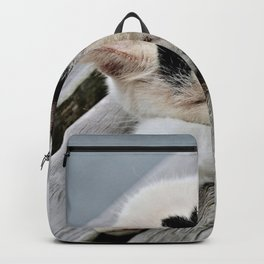 Cat Dreaming Backpack