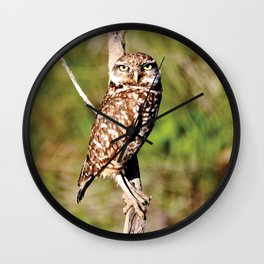 Owl in Day Wall Clock