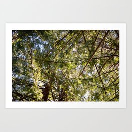 Redwood Ceiling  Art Print