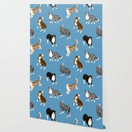 Australian Shepherd Pattern (Blue Background) Wallpaper