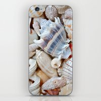 shells iPhone & iPod Skins featuring Shells by Taylor Payne