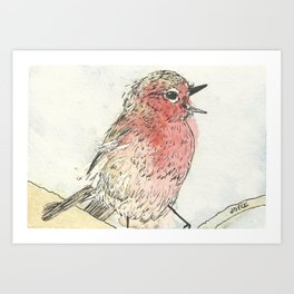 Singing Red Breasted Robin Art Print