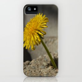 Dandelion That Grew From Concrete iPhone Case