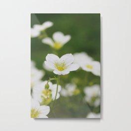 Flower Photography by Skyla Design Metal Print