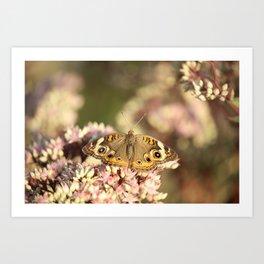 Buckeye Butterfly Macro Art Print