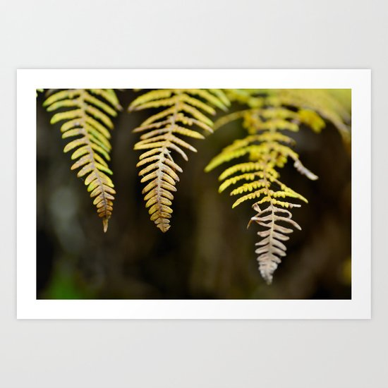 three ferns Art Print