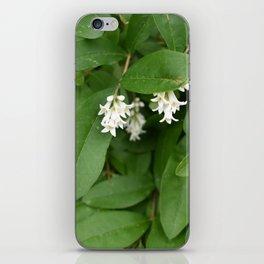 Stars of Nature iPhone Skin