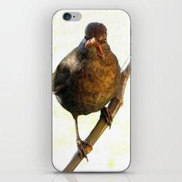 Female Blackbird (Turdus merula) iPhone Skin