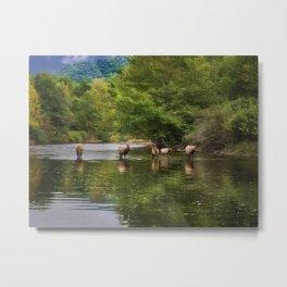 Elk in the River Metal Print