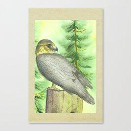 Merlin Falcon Canvas Print