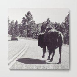 Bison on the move Metal Print