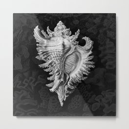 Murex2 (Black & White, Square) Metal Print