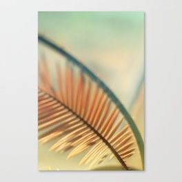 tender 3 Canvas Print
